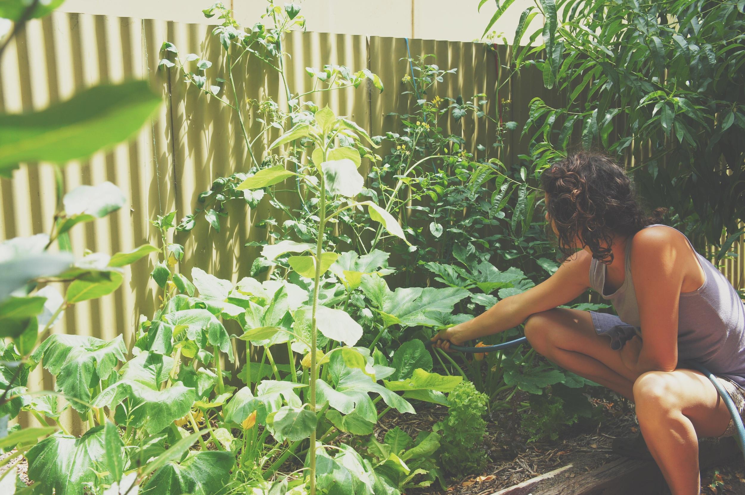 Garden at blue doors on the mains street of Willunga