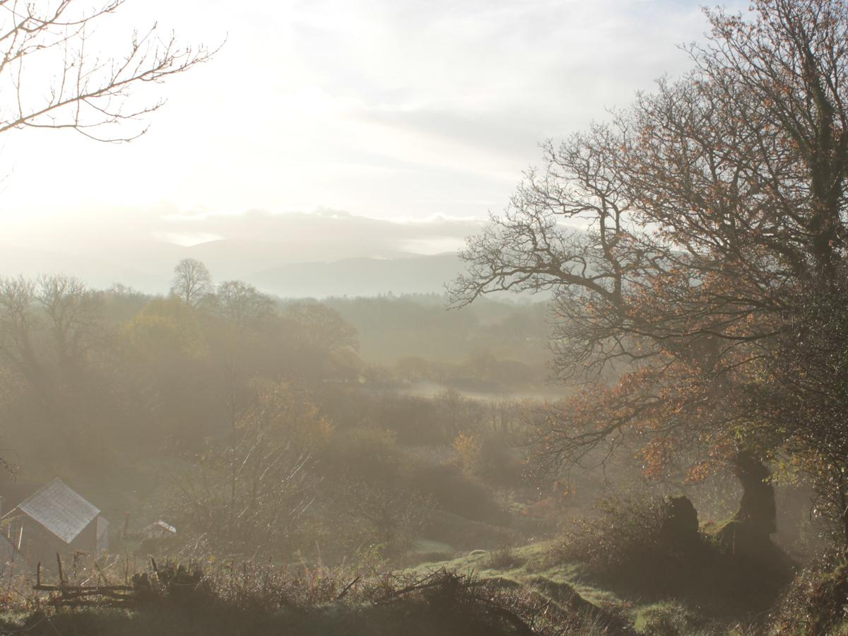 november mornings