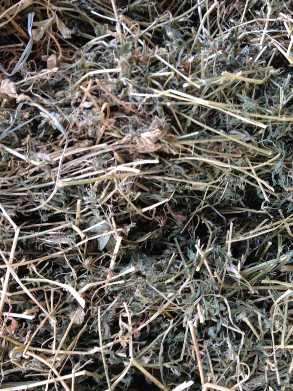 Lucerne Hay For Sale