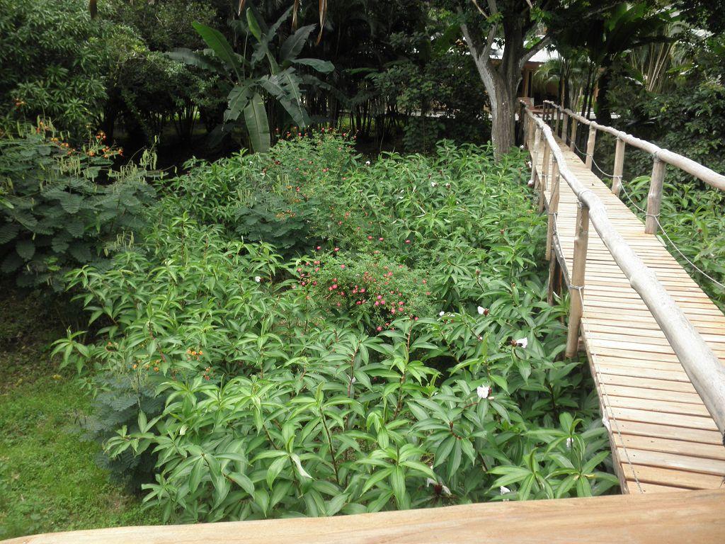 komp-FincaAustria_JungleLodge-Rancho-7.JPG