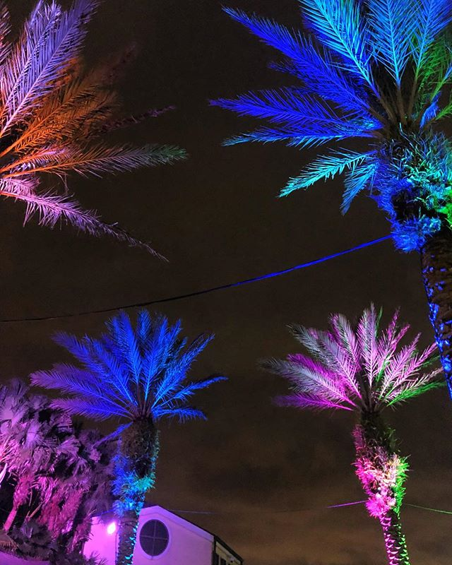 It's beginning to look a lot like Tropical Psychedelic Xmas! #audubonzoolights