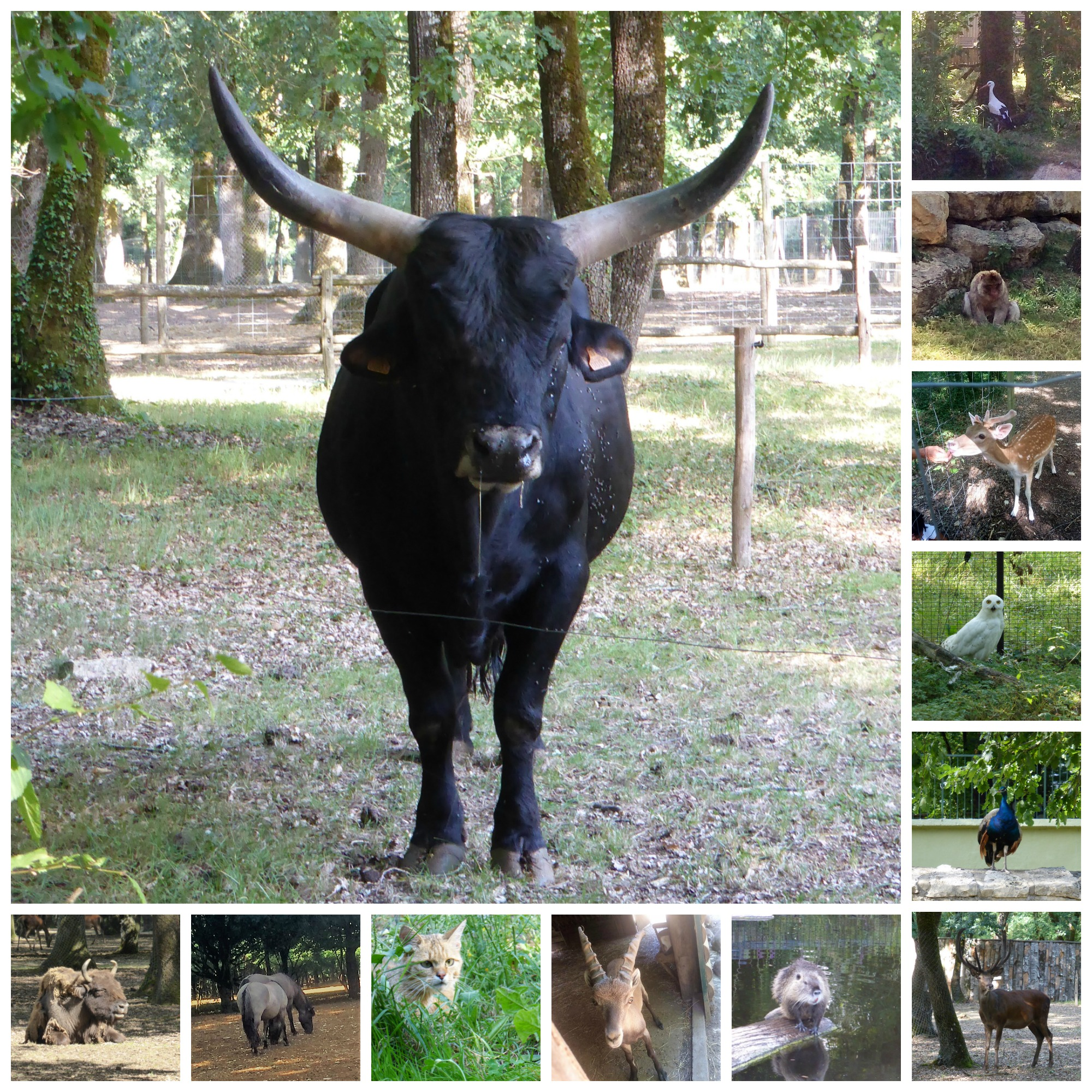 Zoodyssée collage
