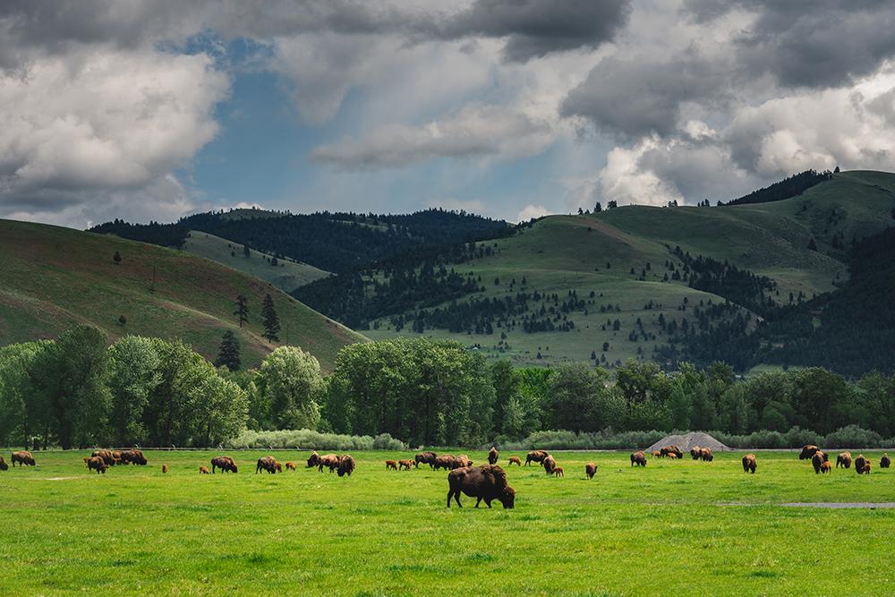 Montana .jpg