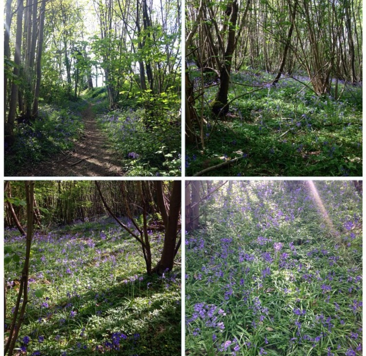 Farningham woods in May