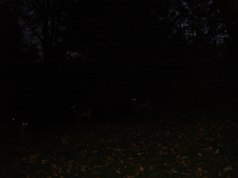 Spooky deer on our hill!