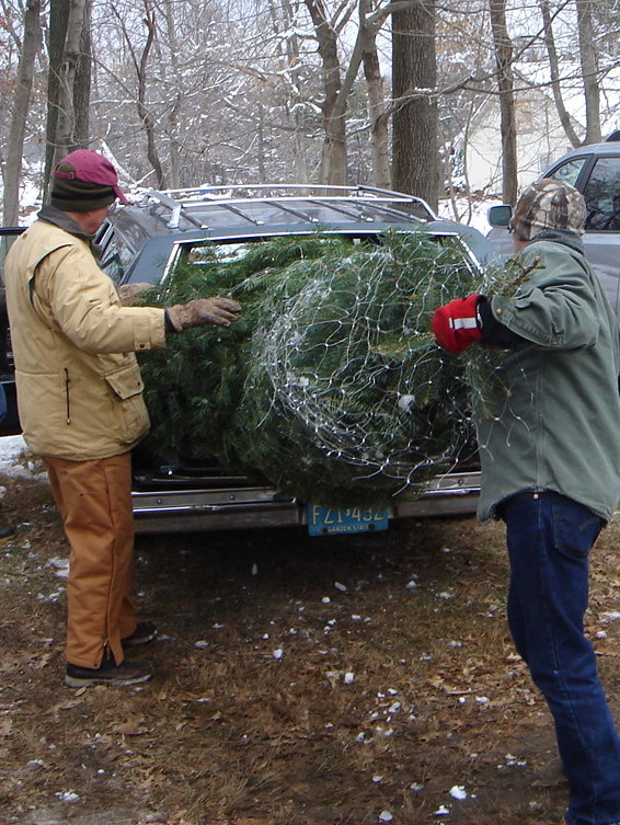 Our two trees being loaded into the Patti Wagon.