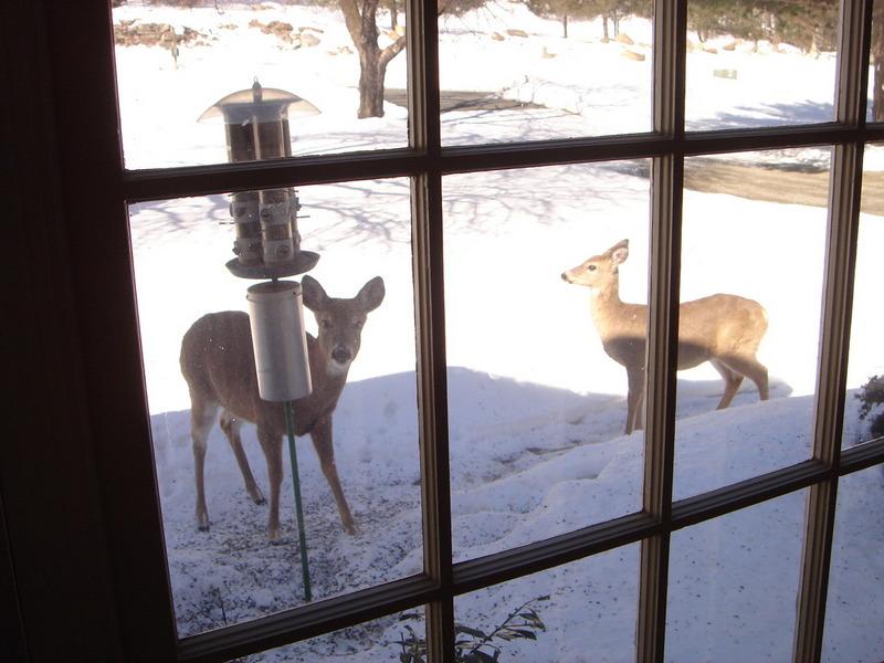 deer at birdfeeder.jpg