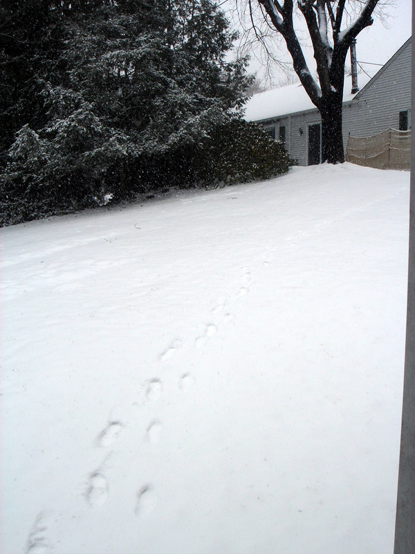 snow on hill.jpg
