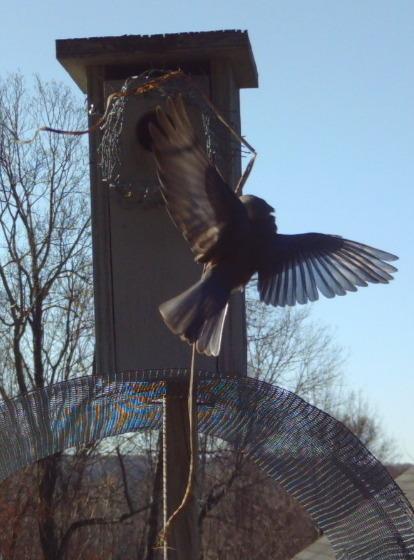 nest feathering.jpg