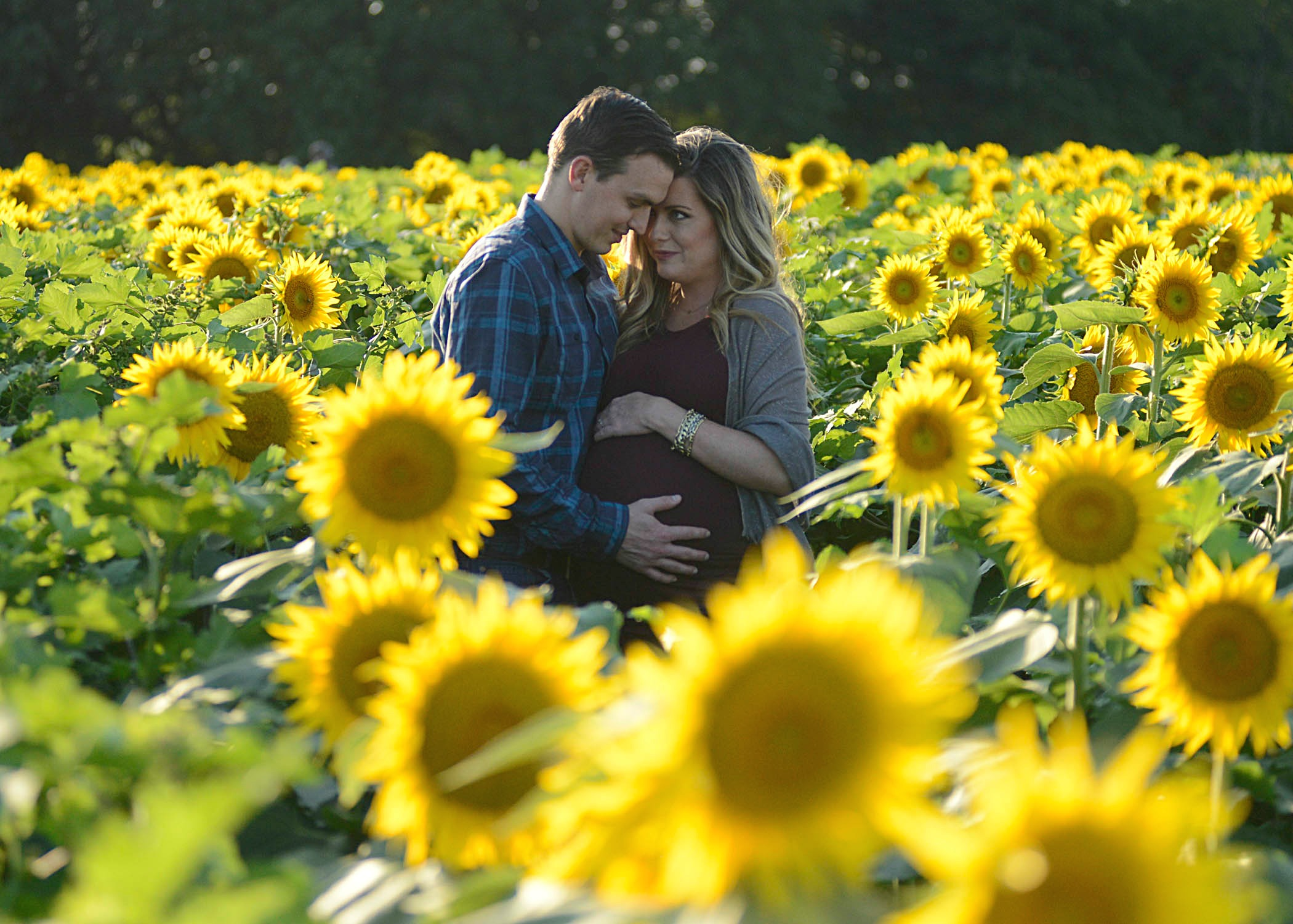 Fall Maternity Photos in a sunflower field in Kansas - Grinter Farms