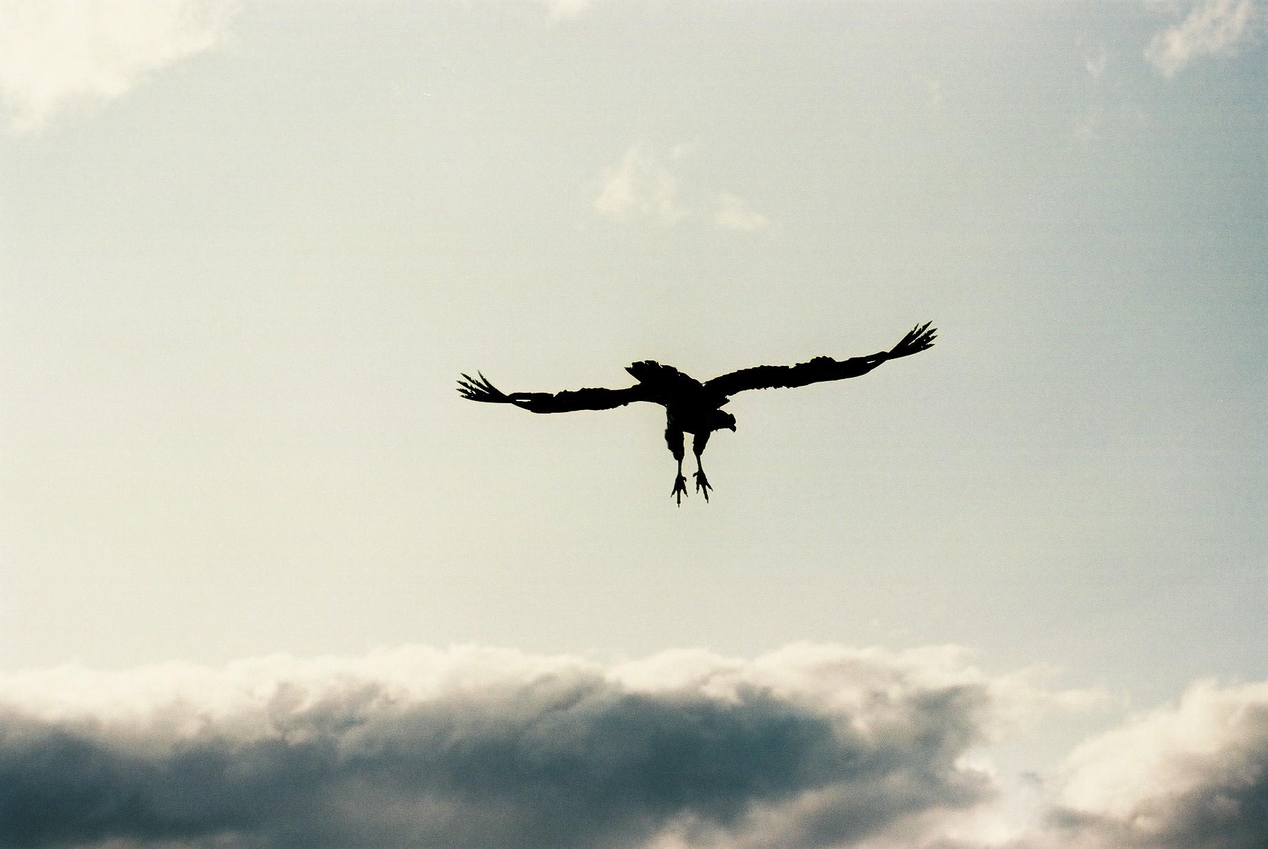 Condor Two, Huechahue.JPG