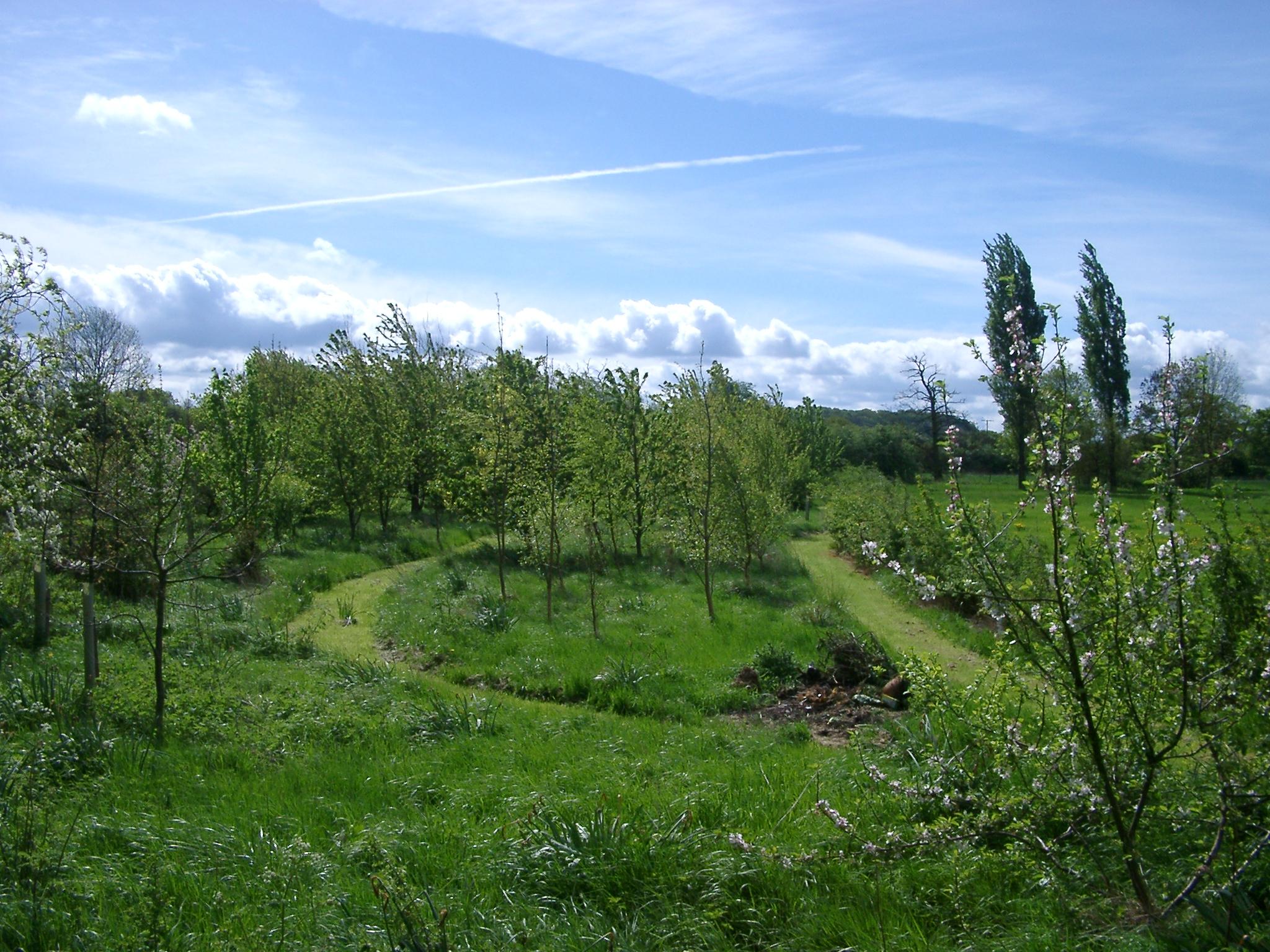 Tree Plantation, Warwickshire.JPG