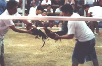 Cockfight, Manila. (JAMES FLINT)