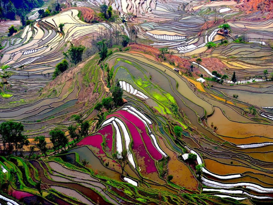 Terraced Rice Field, China by   Thierry Bornier