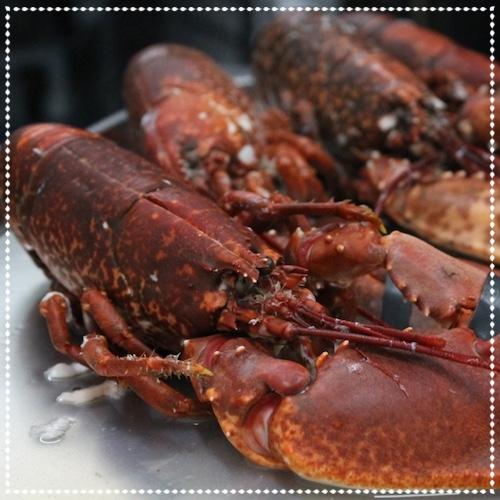 Lobstar - 8th April 2017