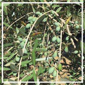 Bistro One Olives.jpeg
