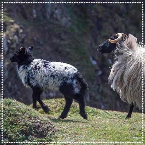 Caor Acla - Achill Island