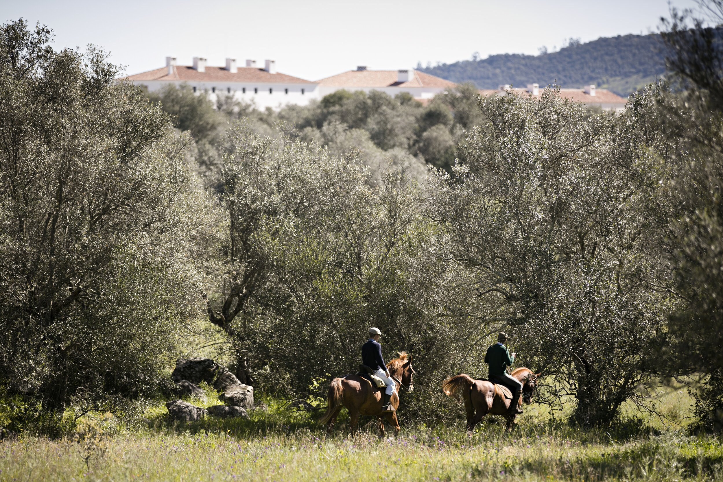 HORSES_010416_3596(©Nelson Garrido).jpg