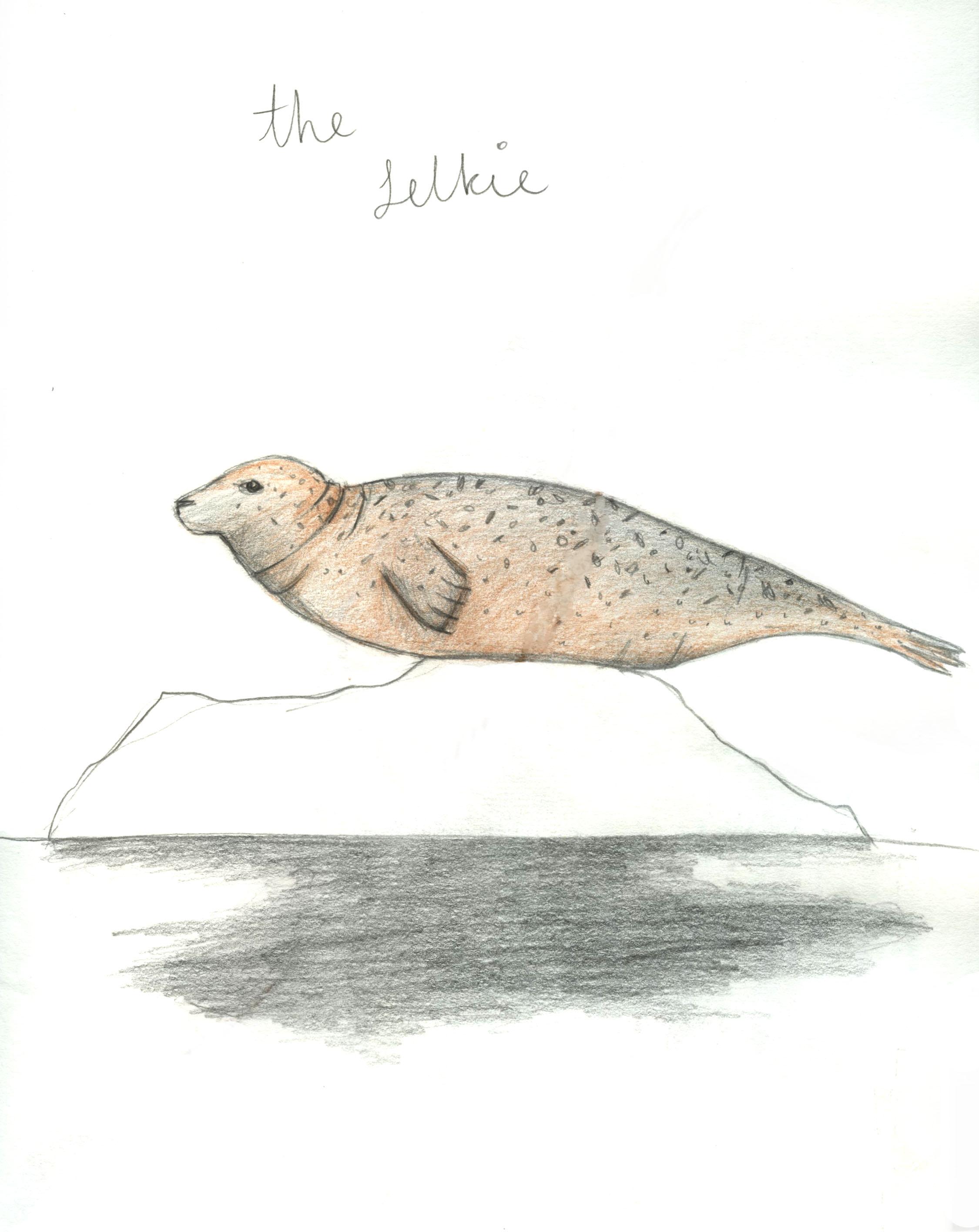 Seal or selkie?