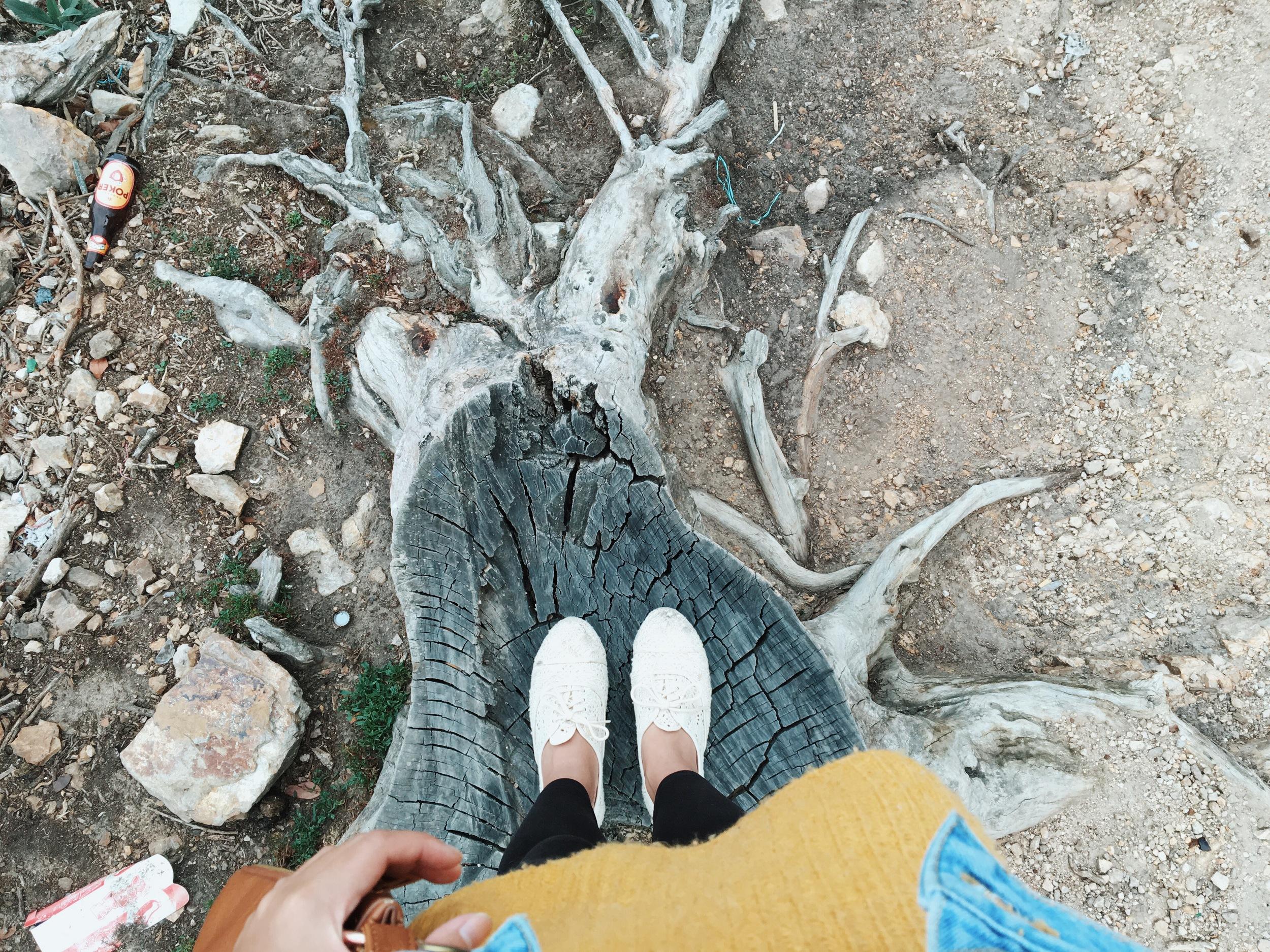 from where I stood on a tree stump