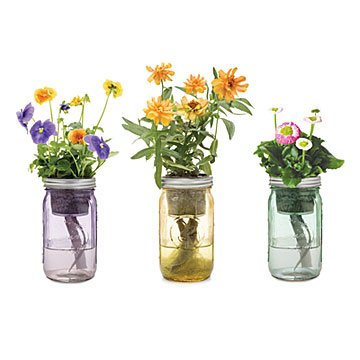 Mason Jar Indoor Plant Garden