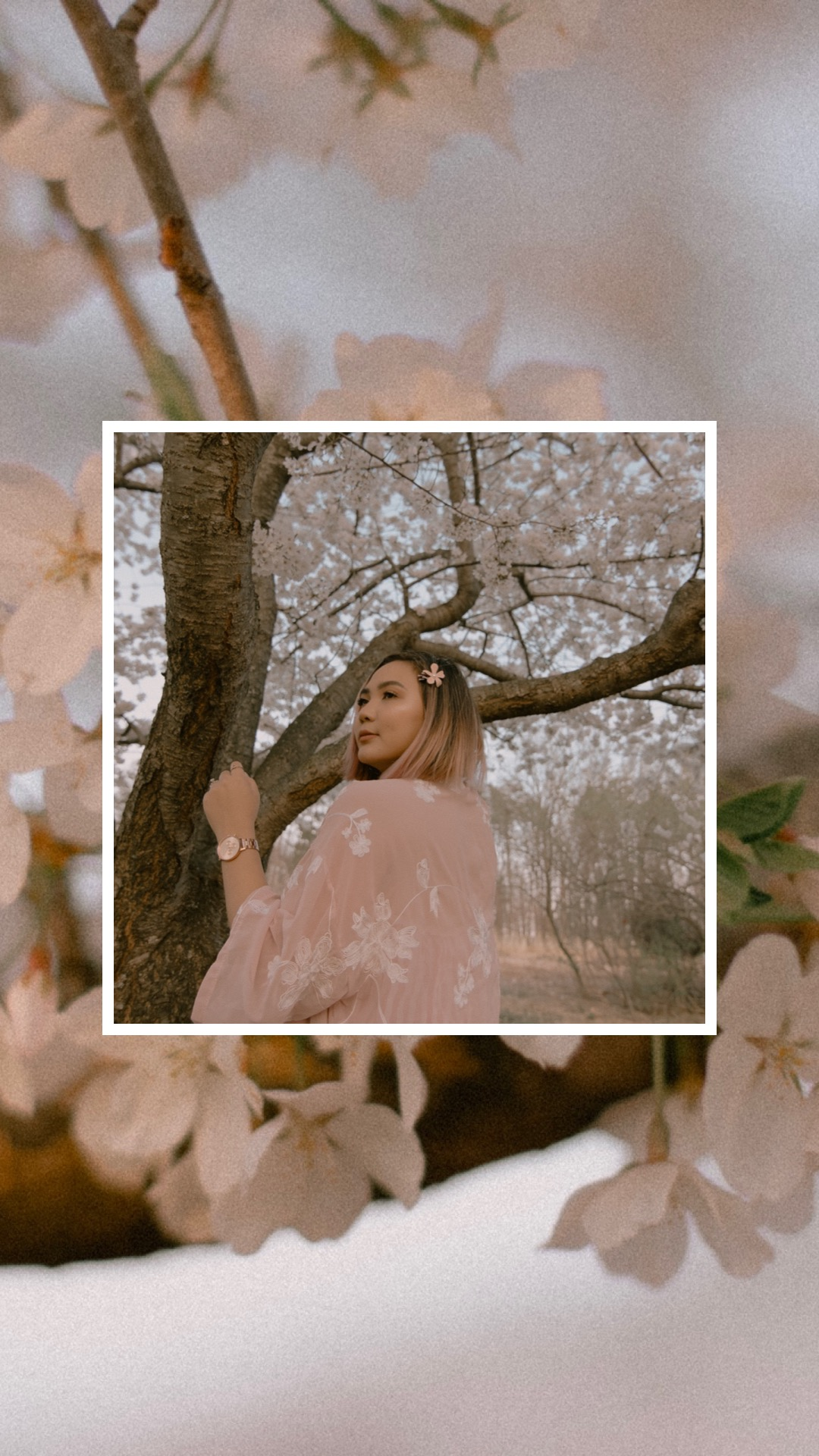 I Took Photos with a Cherry Blossom Tree and it was Magical