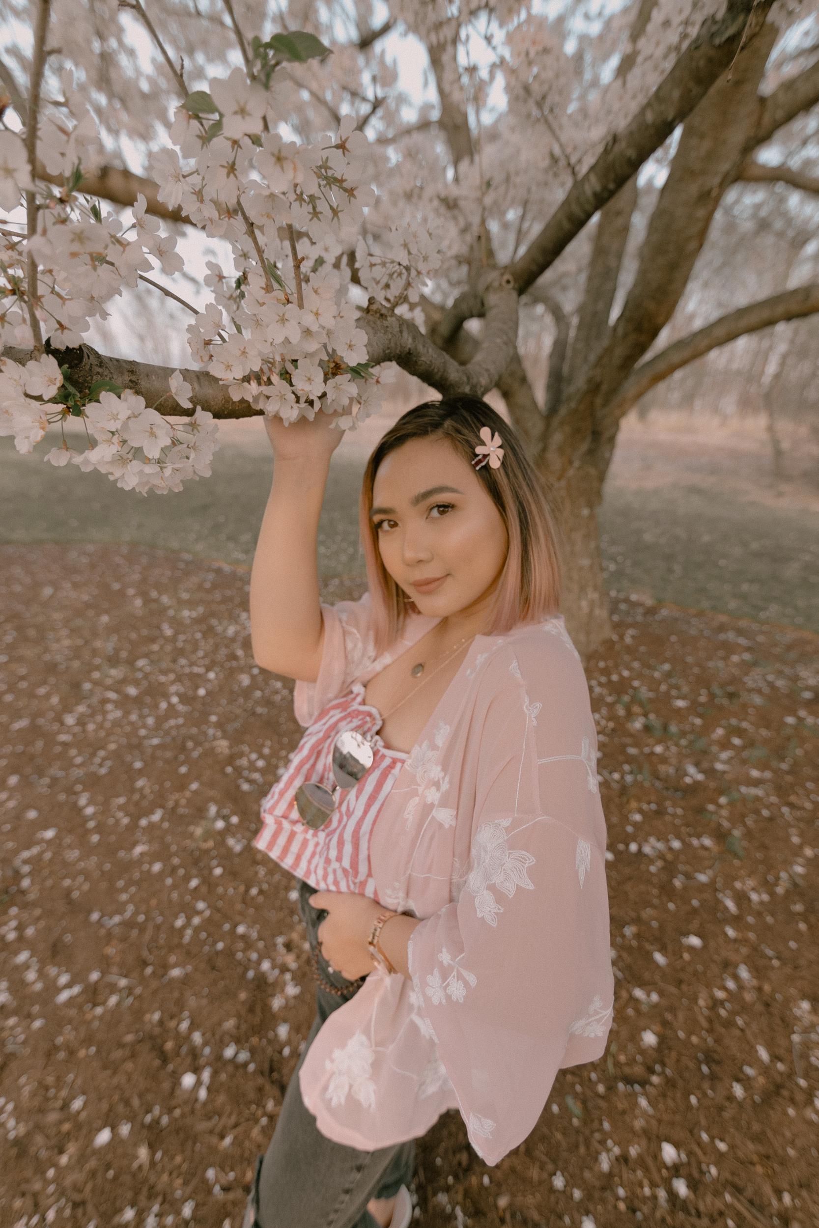 Cherry Blossom Tree DC