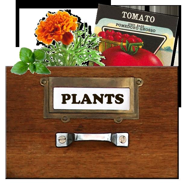 Plants_City_Farmers_San_Diego