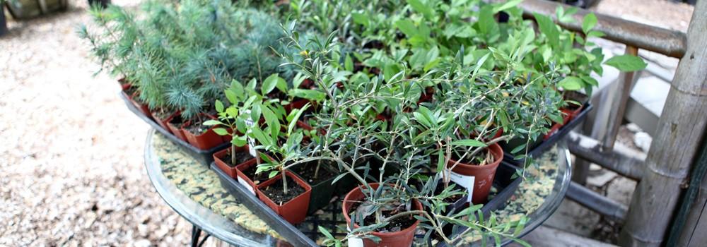 bonsai-plants.jpg