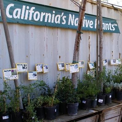 California Natives