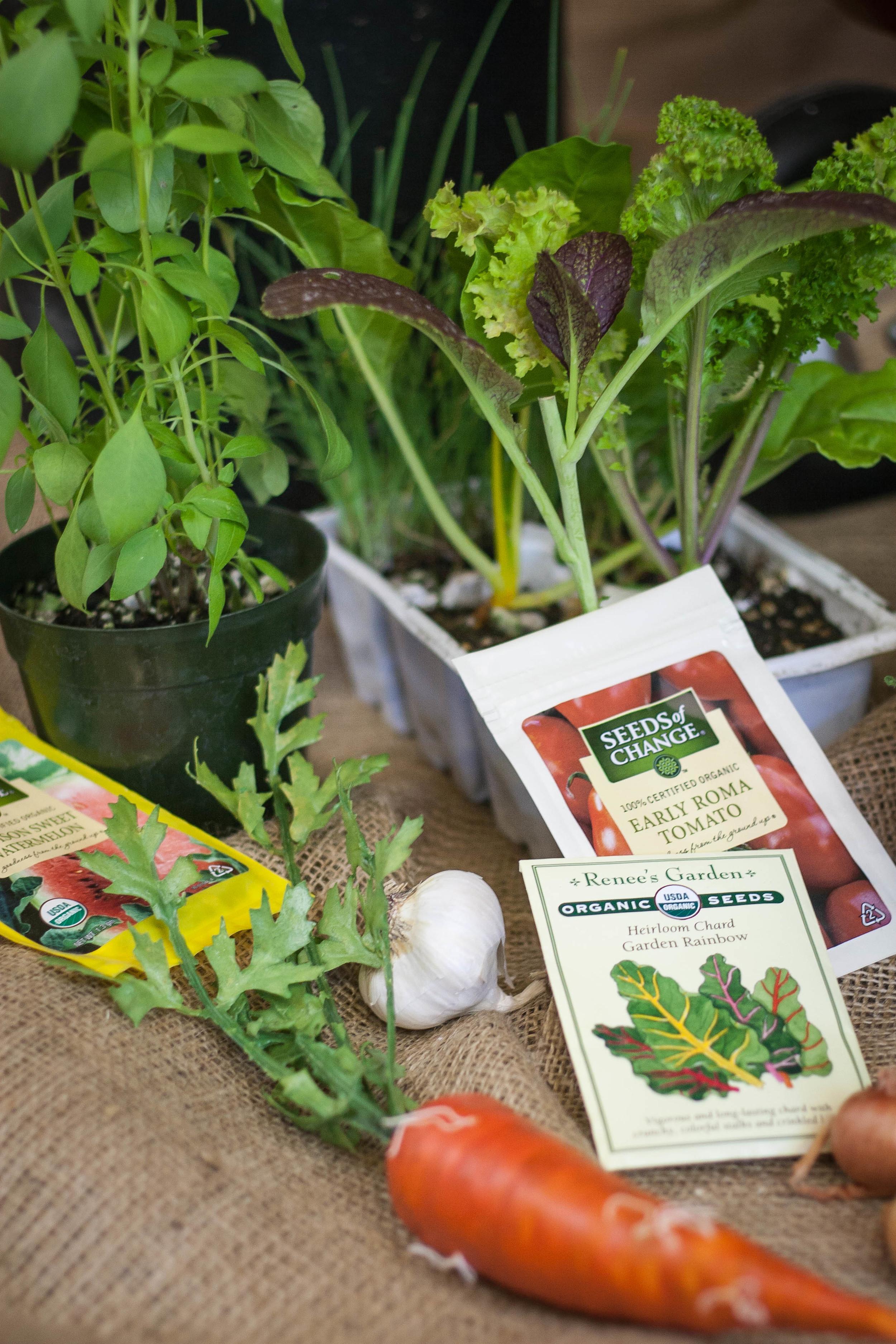 organic-seeds.jpg