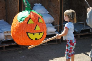 Our Fall Harvest Festival has something for everyone to enjoy.