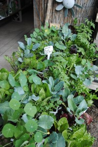 Variety Packs - six different plants in one pack! $5.99 each.
