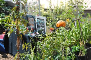 You're invited! Saturday, October 18, 9-4, is our Fall Harvest Festival. In addition to the tables of locally-made crafts...