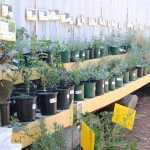 Plan for some new perennials. Now is a good time to plant. Consider California Native plants - attractive and drought tolerant.