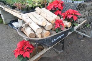 Firewood-1-300x200.jpg