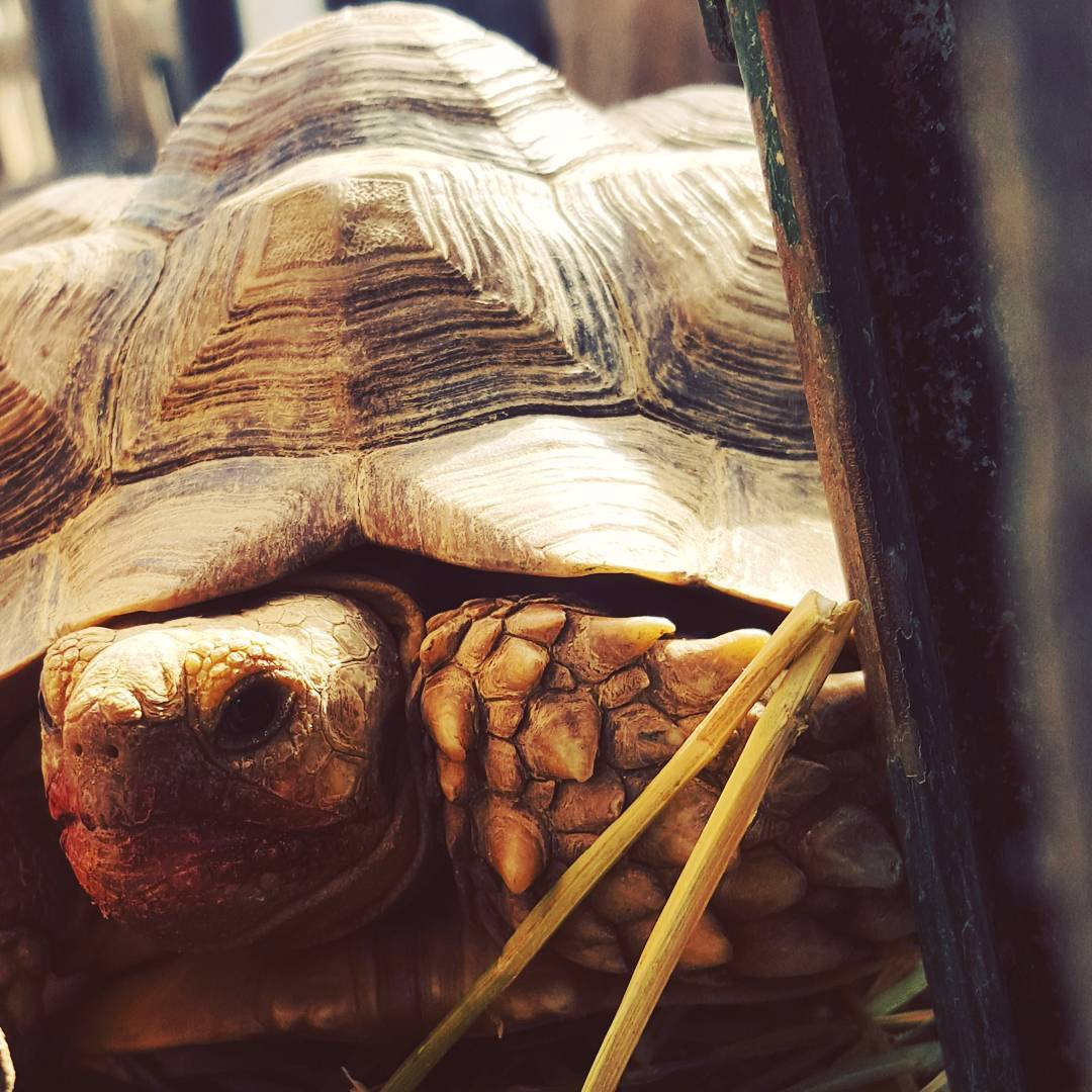 Relaxed Rescue Tortoises