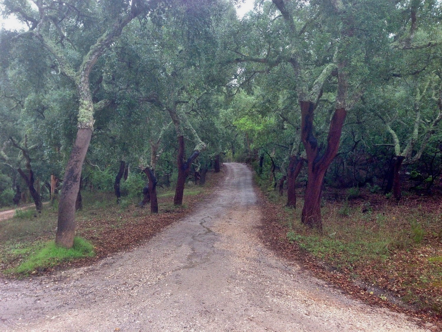 Cork Trees, Algarve Walks, Great Circle Route