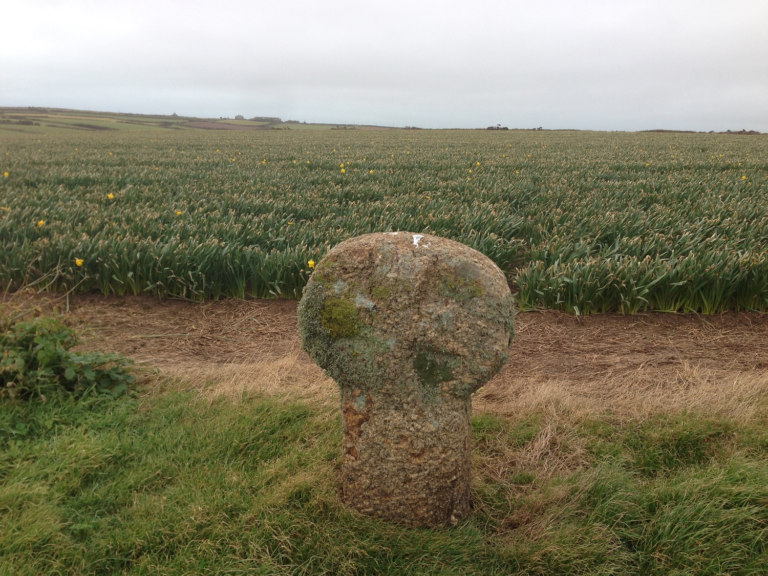 Great Circle Route, South West England Walks & Gardens, Daffodils & Ancient Relics on the Coast Path