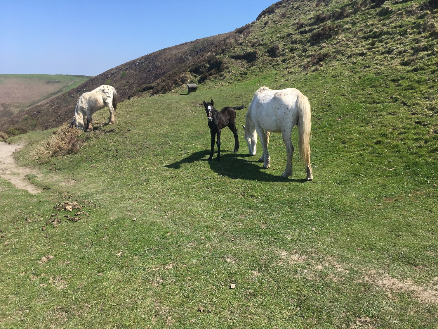 Great Circle Route, South West England Walks & Gardens, Along the Trail Wild horses