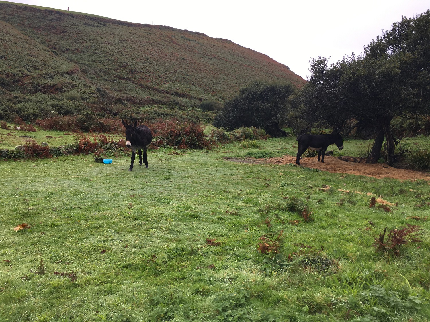 Great Circle Route, South West England Walks & Gardens, Donkeys Along the Trail