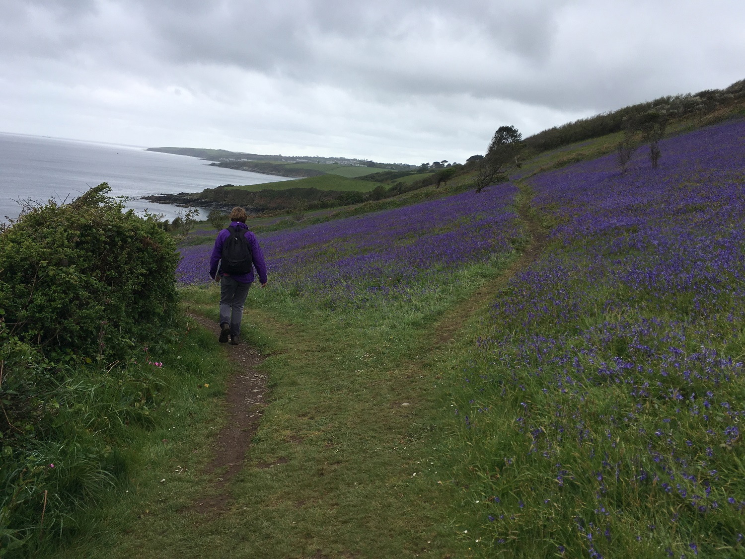 Great Circle Route, Cornwall & South West England Walks & Gardens, Along the Trail Spring Bluebells
