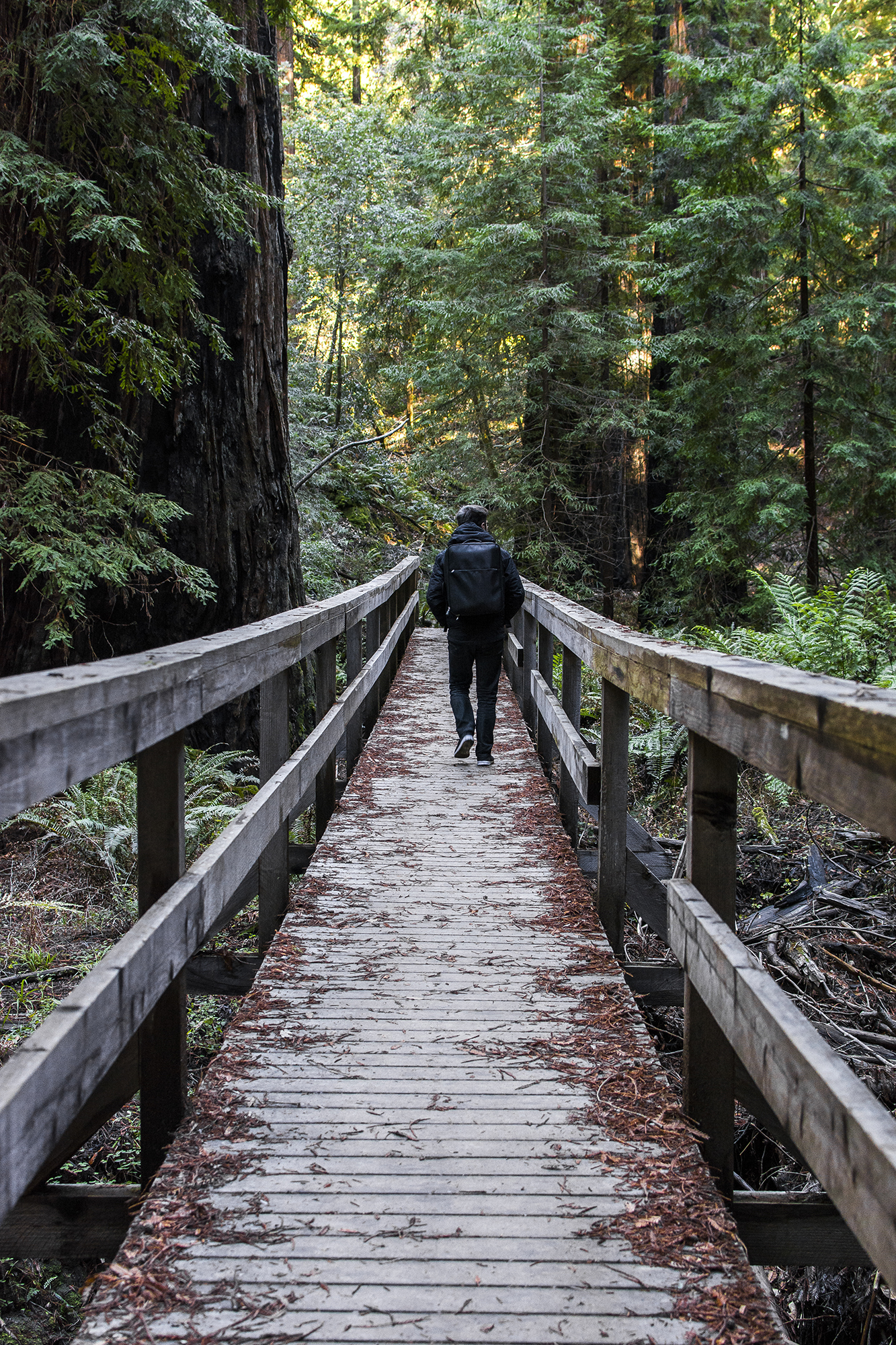 Pic. 1 : My brother walking across the boardwalk in the heart of Montgomery Woods