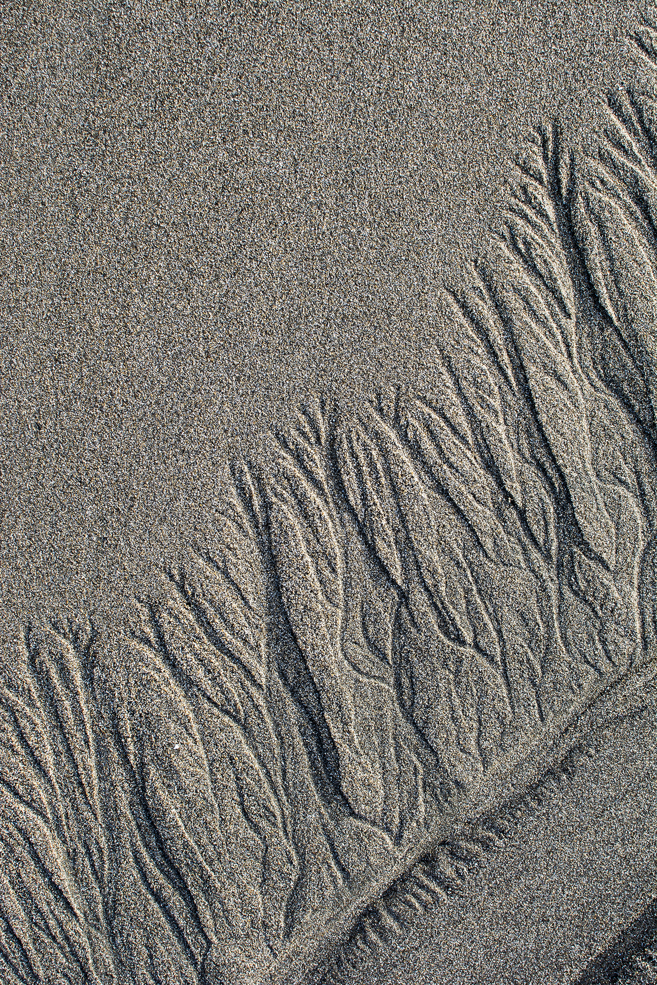 Pic. 2 : Fractal patterns appear in the sand of Schooner Gulch State Beach