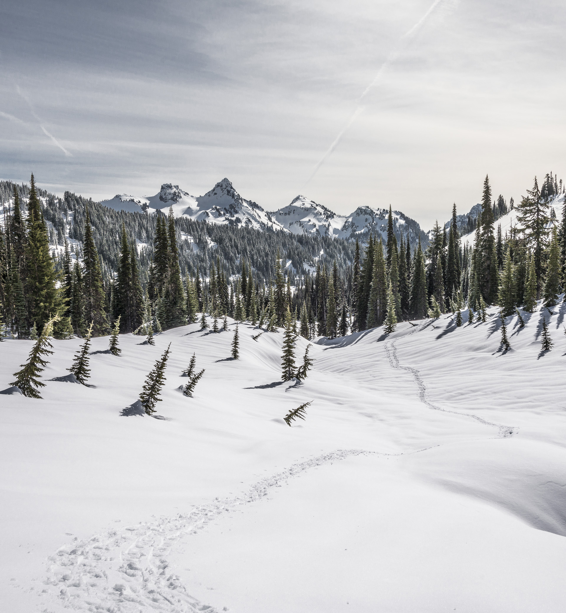 Snowshoe tracks leading into the valley below the Tatoosh Range, Mount Rainier National Park, WA
