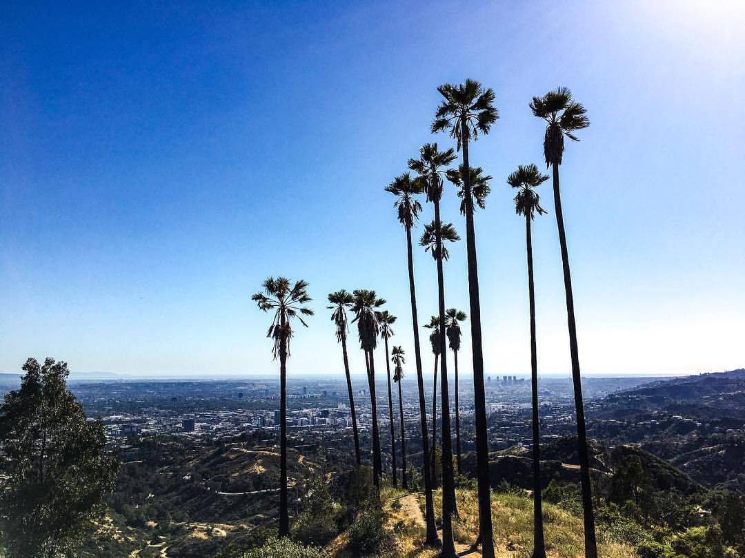 california blue (at Griffith Hiking Trail)