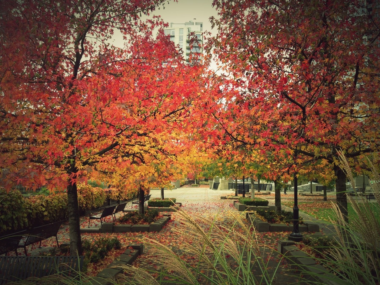 at George Wainborn Park – View on  Path .