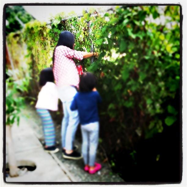 Bears picking berries. (Taken with  Instagram  at Granville Street Bridge)