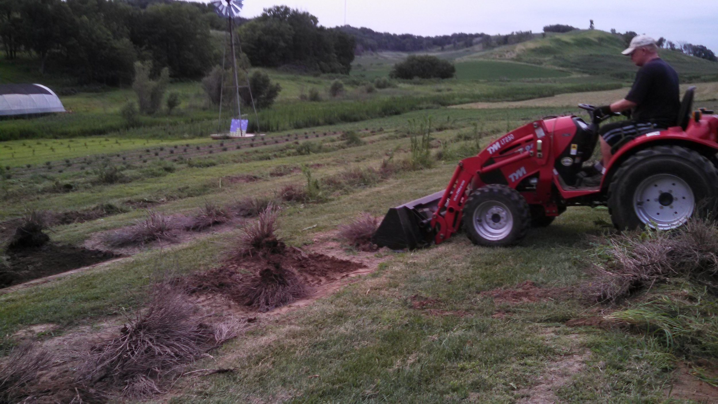 Dead plant removal, July 2014