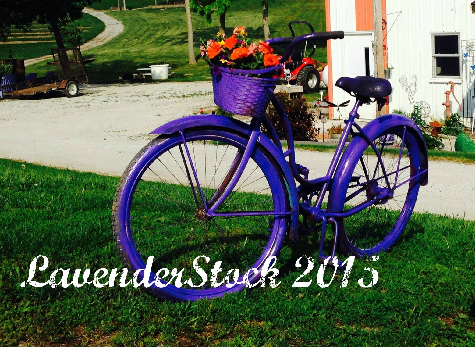 LAvenderstock was our newest event in 2015. We are looking forward to growing this event into our signature gathering each year.. This year Lavender Stock will be July 20th from 10 am to 5 pm.  Lots of fun things planned